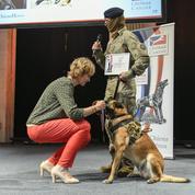 À la mairie de Paris, 17 chiens héros récompensés pour leur travail