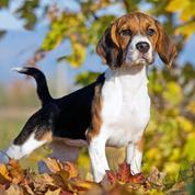 Comment choisir votre chien de chasse ?