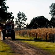 Chicago: blé, maïs et soja dans le rouge, les opérateurs prennent leurs bénéfices