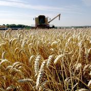 Blé et maïs en repli, les marchés reprennent leur souffle