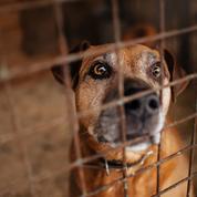 Adopter un chien dans un refuge : ce qu'il faut savoir