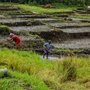 L'ONU appelle à transformer les systèmes alimentaires mondiaux