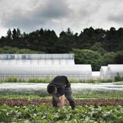 «Les agriculteurs français sont au bord d'une overdose de normes»