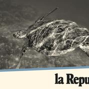 Les tortues de Jesolo: «On n'a jamais assisté à une éclosion aussi septentrionale»