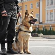Une association réclame à Darmanin un statut officiel de chien policier