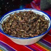Agronutris lève 100 millions d'euros pour industrialiser ses protéines à base d'insectes