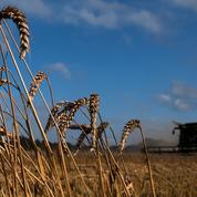 Le blé en baisse dans un marché tendu