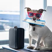 Et la compagnie aérienne la plus «pet friendly» est...