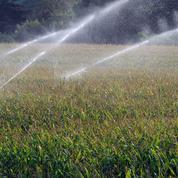 Le maïs en baisse dans un marché peu mouvementé