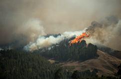 La progression de l'incendie sur l'île de Grande Canarie ralentit