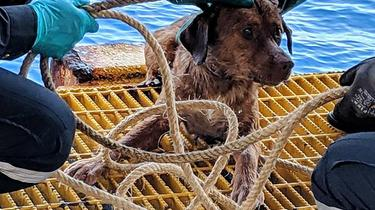 Thaïlande : un chien secouru à 220 km des côtes