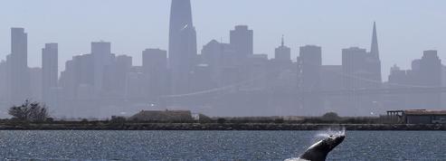 San Francisco interdit la vente de cigarettes électroniques