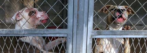 Femme tuée par des chiens : le compagnon de la victime veut engager un avocat pour son animal