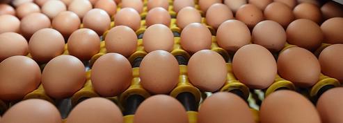 Peu chers et stars des recettes de cuisine : les ventes d'œufs décollent