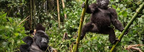 Sept raisons de partir à la découverte du Rwanda (quand ce sera possible)