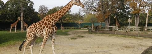 Château de Chantilly, zoo de Vincennes, les 5 sorties du week-end