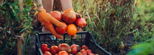 Manger bio est-il vraiment meilleur pour la santé ?