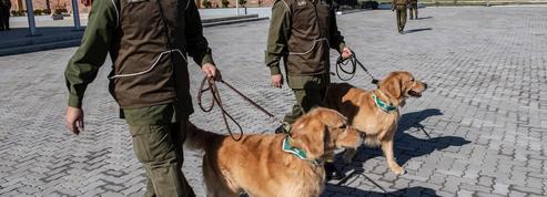 Au Chili, des chiens dressés pour détecter les malades du Covid-19