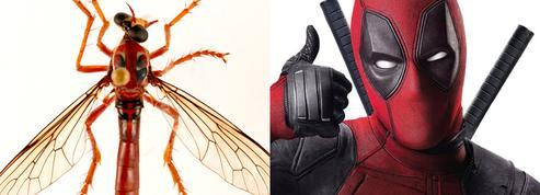 Deadpool, Thor, Loki... Des scientifiques donnent des super-noms à cinq mouches