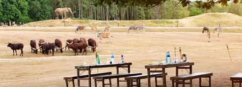 Un barbecue au milieu des animaux sauvages