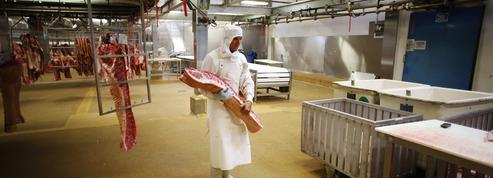 Plan de relance : comment le gouvernement peut-il «moderniser» les abattoirs ?