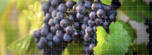 Vin bio, naturel ou en biodynamie: comment vous y retrouver ?