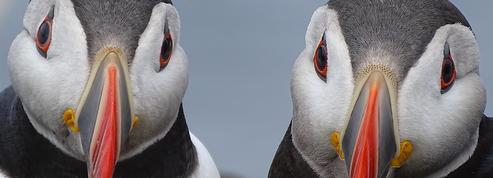 Découvrez 10 des plus belles photos animalières de l'année