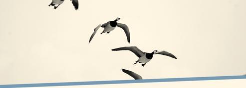 Bientôt des avions qui volent comme des oiseaux? Une grande expérience à l'horizon pour Airbus