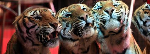 Interdiction des animaux sauvages dans les cirques : manifestation à Paris demain