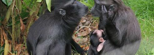Trois parcs animaliers à visiter pendant les vacances de la Toussaint