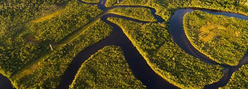 Déforestation : les eurodéputés veulent une traçabilité accrue des produits
