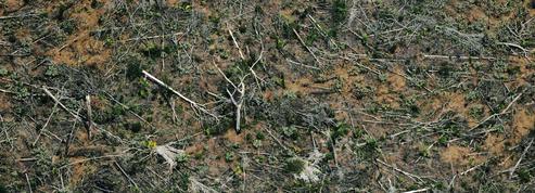 Lutte contre la déforestation importée: pour les ONG, le compte n'y est pas