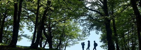 Pourquoi le gouvernement veut planter 50 millions d'arbres