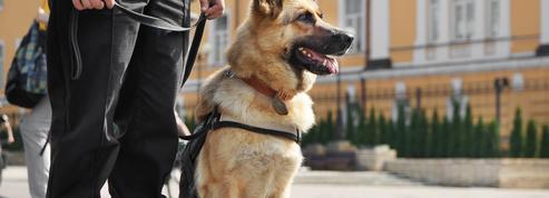 Lyon : un homme poignarde le chien d'un vigile à plusieurs reprises