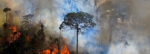 Les «fronts de déforestation» se multiplient sur la planète