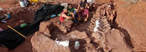 Le squelette du nouveau plus grand dinosaure pourrait avoir été trouvé