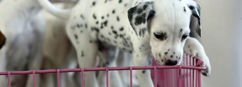 Animaux de compagnie : ce que change la proposition de loi pour la Lutte contre la maltraitance animale