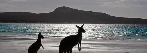 En Australie, la plus ancienne œuvre d'art aborigène représente un kangourou