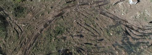 Des centaines d'arbres volés dans les forêts de l'Ariège