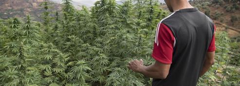 Le plus gros trafiquant français de cannabis en attente d'extradition depuis Dubaï