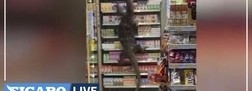 Thaïlande: un immense varan fait irruption dans un supermarché
