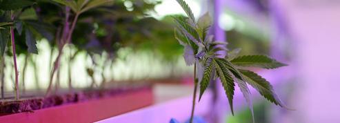 Norvège: le fonds souverain prié de ne pas toucher au cannabis