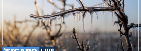 «On se retrouve le matin sur nos exploitations, les larmes aux yeux...» Après le gel, les vignerons pansent leurs plaies