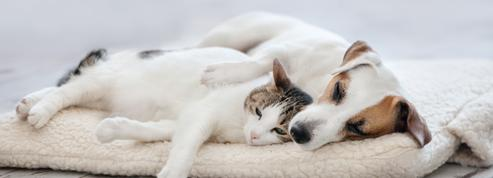 Espagne: vers une garde alternée pour les animaux en cas de divorce