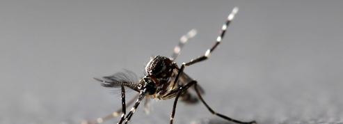 En Floride, les moustiques génétiquement modifiés font polémique