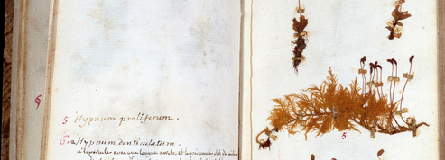 Un autographe de Rousseau découvert dans un herbier du jardin botanique de Lyon