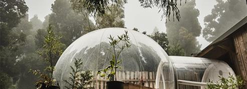 Trois voyages autour des plantes pour jouer les apprentis botanistes