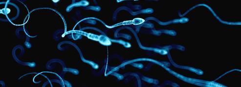 Les vaccins à ARN affectent-ils la qualité du sperme?