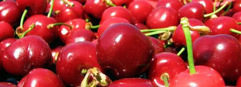 Quand acheter des cerises ?