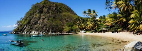 De nombreux radeaux de sargasses se dirigent vers les Antilles